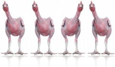 http://www.inglesnosupermercado.com.br/wp-content/uploads/2009/05/galinhas-e-frangos1.jpg