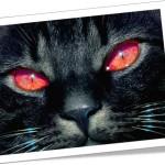 halloween symbols black cat dia das bruxas gato preto símbolo