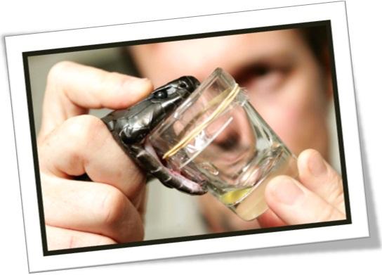 extração de veneno de cobra, soro antiofídico, cobra venenosa