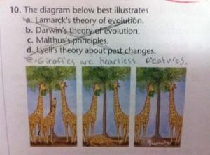 pérolas dos estudantes, inglês, biologia, girafas, crueldade, funny answers