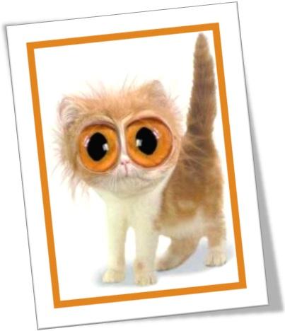 gato de olho grande, mau-olhado, olho gordo, evil eye em inglês