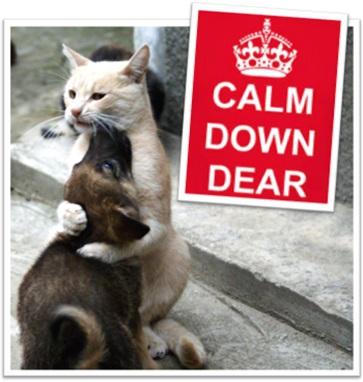 cão e gato se abraçando, calm down dear