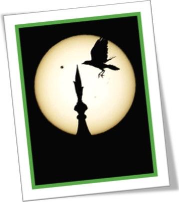silhueta de pássaro, pássaro, lua, sombra, silhouette of a bird