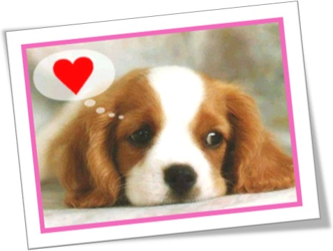 puppy love primeiro amor cadela apaixonada