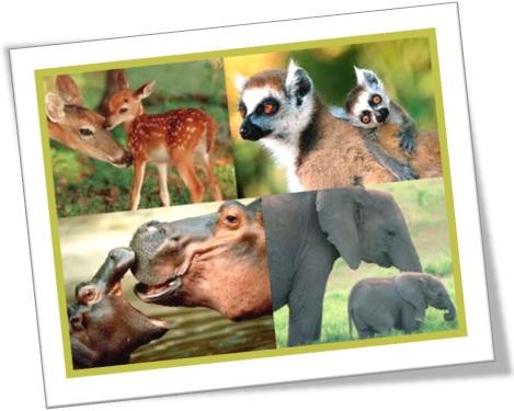 filhotes de veados, lêmures, hipopótamos, elefantes, animail selvagem