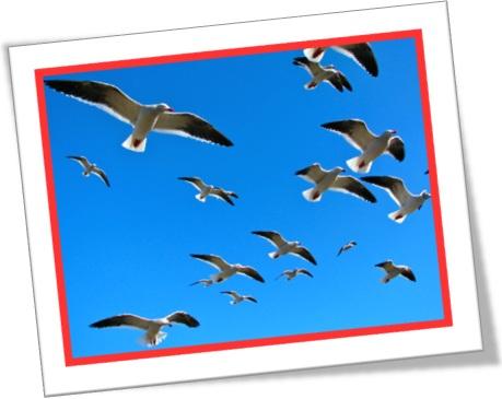 flock of birds, revoada de pássaros, bando de pássaros