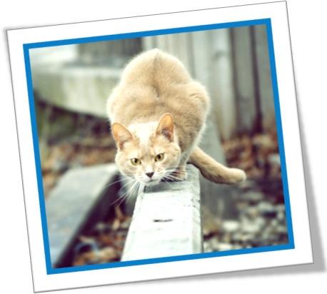 gato agachado, salto do gato, cat crouched to spring, gato caçando
