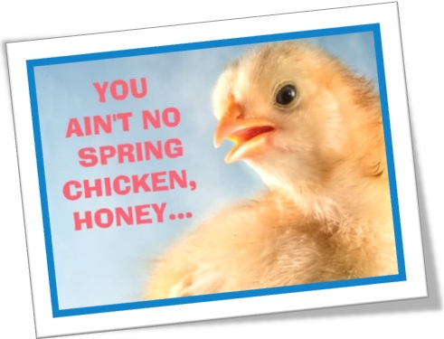 you are no spring chicken, you aint no chicken, honey