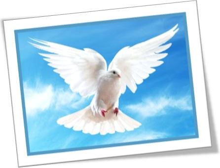 pomba da paz peace dove pomba branca voo céu azul