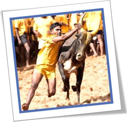 strong as an ox, forte como um touro, homem segura touro pelos chifres