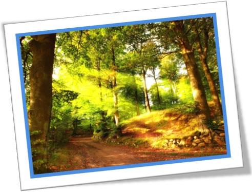 clareira glade árvores luz estrada de areia cheiro de mato