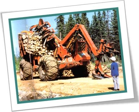 desmatamento na floresta tora de árvores trator caminhão crime ambiental