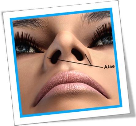 asas do nariz, alae of the nose, anatomia, rosto de mulher, ala, asa