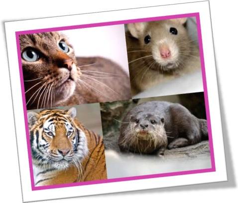 animals with white whiskers animais com bigode branco whisker