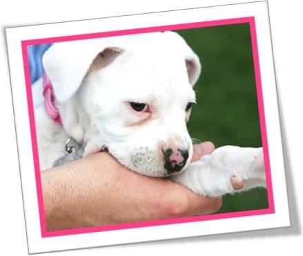 nip dog, my dog gave her a nip on the hand