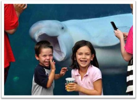 photobomb beluga branca fotografia crianças sorrisos diversão aquário