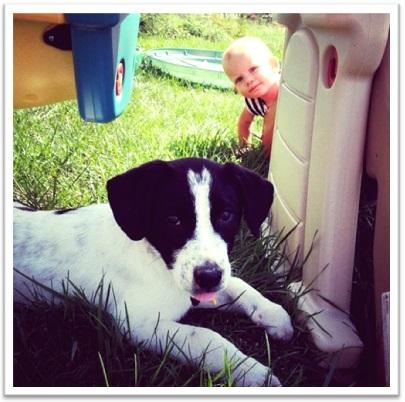 photobomb criança cão cachorro pet animal de estimação