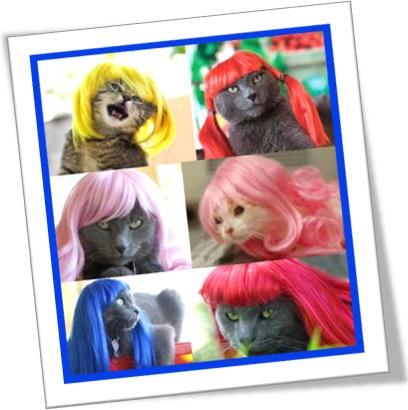 gatos gatas usando perucas coloridas vermelha roxo amarelo azul rosa, mulher fofoqueira