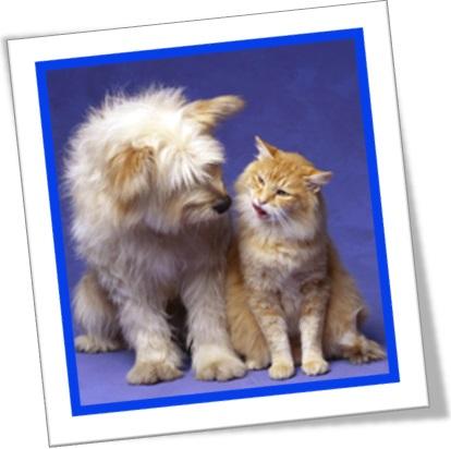 live like cat and dog, viver como gato e cachorro, viver como cão e gato