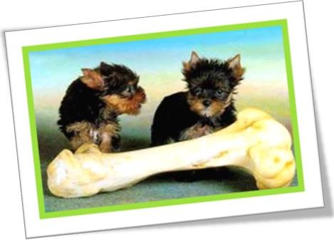 play with my bone, cachorros brincando com osso, pênis