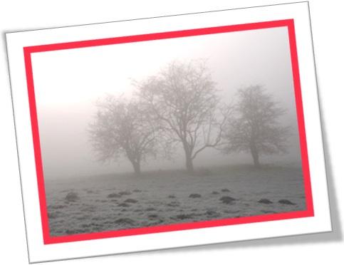 chilly morning, manhã fria, nevoeiro, fog, neblina, cerração no campo