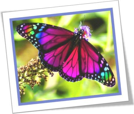 borboleta asas coloridas, rainbow em ingles, butterfly rainbow wings