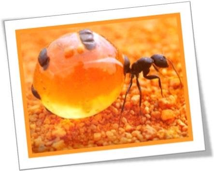 formiga formigueiro rainha pote de mel inseto alimento néctar colônia