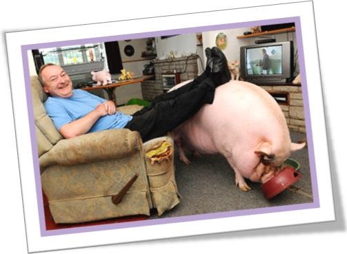 make amends em inglês, homem e seu porco de estimação, man, pet pork