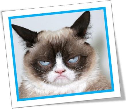 gato castrado, fixed cat, usos de fix em inglês