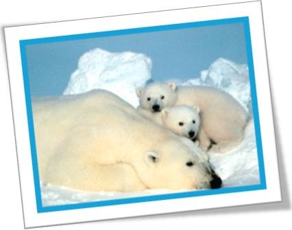 polar bear, urso polar, mãe urso polar e ursinhos bebês