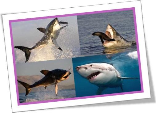 ataque de tubarão branco, white pointer, white shark, great white, white death