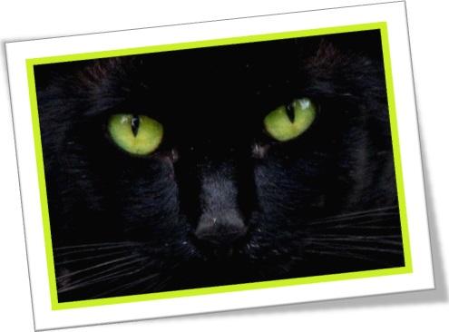 gato preto de olhos verdes, dia das bruxas, espírito, demônio