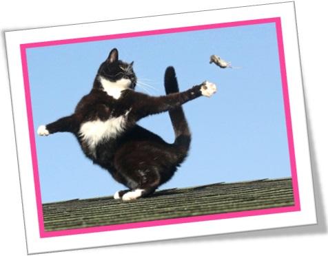 jogo de gato e rato, gato brincando com rato, briga de rato e gato