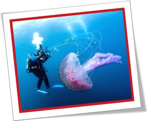 diver, jellyfish, medusa, água viva