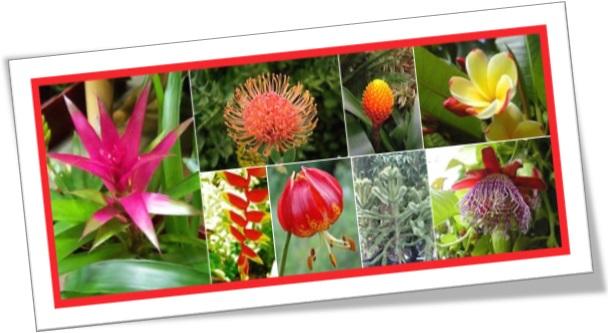 exotic plants, plantas exóticas, vegetação, jardim, jardinagem
