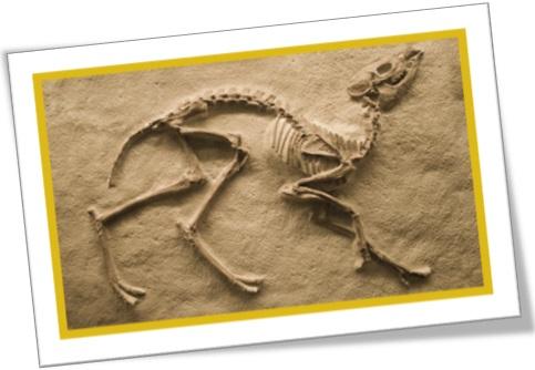 datação por carbono, carbon dating, fóssil animal
