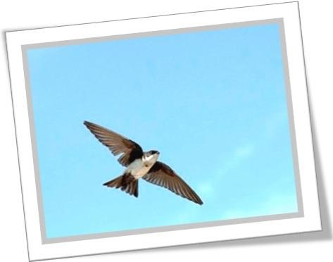 uma andorinha só não faz verão, one swallow doesn't make a summer