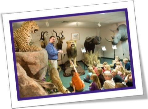 história natural, animais empalhados, leão, onça, rinoceronte, búfalo