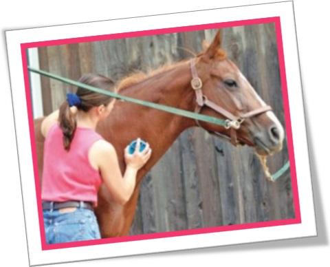 almofaçar cavalo, escovar cavalo, almofaça, mulher escovando cavalo
