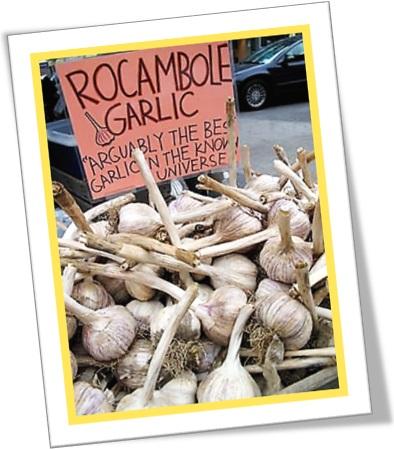 rocambole garlic, alho rocambole, alho espanhol, alho mourisco