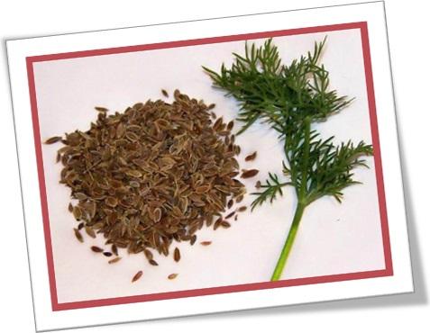 dill seeds, sementes de aneto, endro, endrão, especiarias