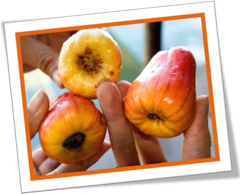 Uso de cashew em inglês que você memoriza de caju em caju